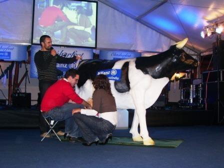 Atrakcia Krava na dojenie